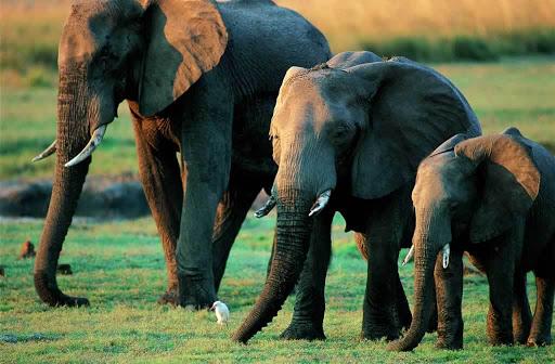 DBA меняем слонов на переправе