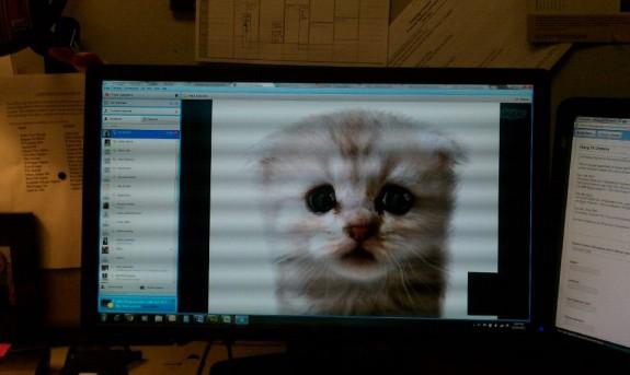 Вирусный фильтр «Я не кот» оказался устаревшим ПО