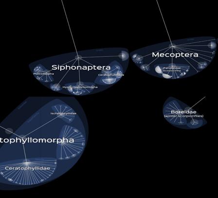 Биоинформатика на минималках. Почему блохи родственники ледничков?