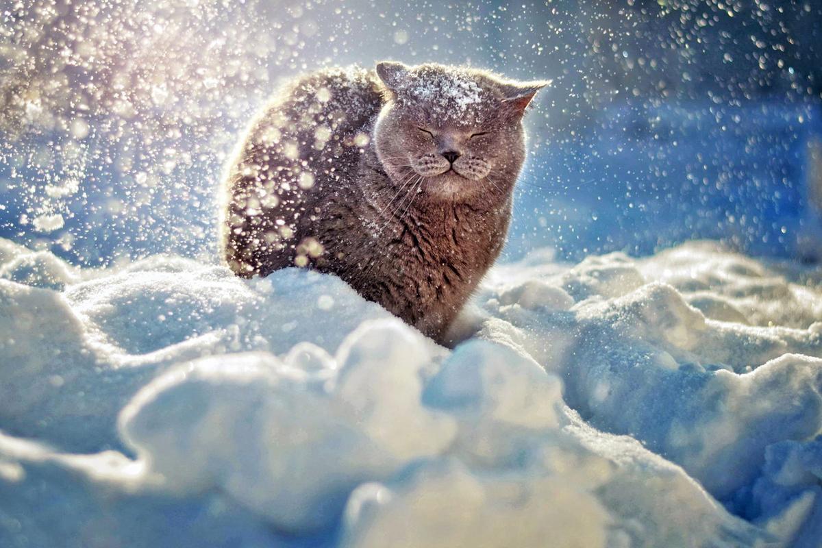 Поточный шифр SNOW