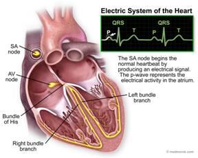 Источник: ECG Medical