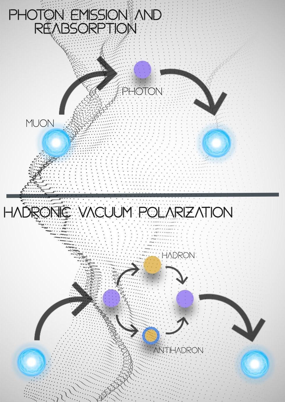 Испускание и поглощение фотона мюоном— наиболее распространённая возможность. Существует также вероятность временного превращения фотона в адрон и антиадрон, как показано в нижней половине