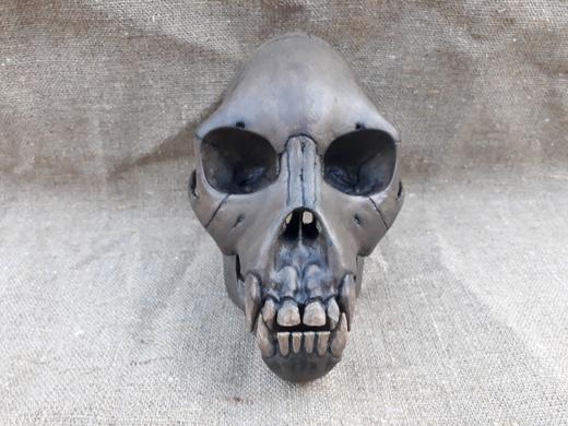 Реплика черепа самки Проконсула. Источник: https://vk.com/nessiterabf