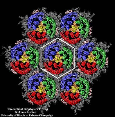 Кристаллическая пурпурная мембрана-система, которую Клаус Шультен изучал в конце 1990-х годов.