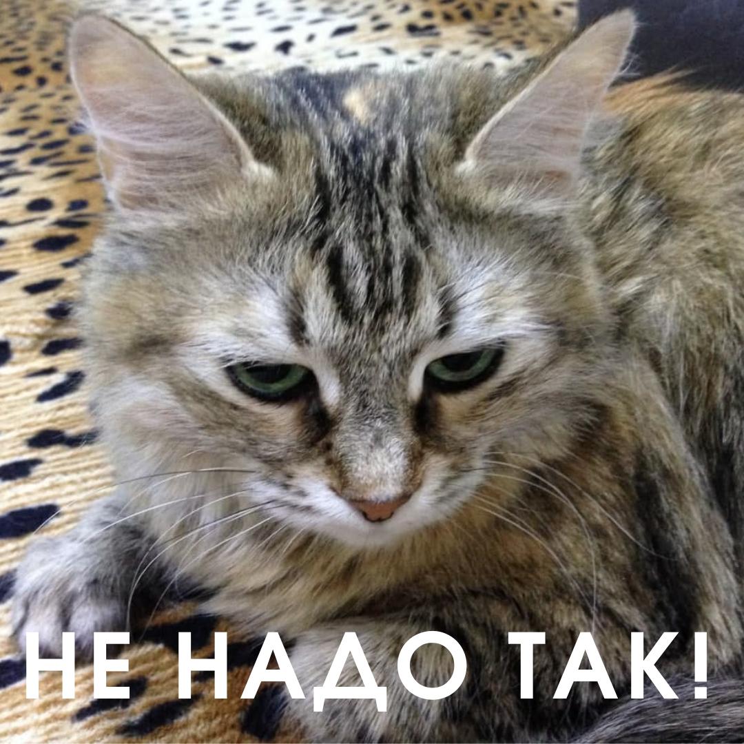 Кошечка одного из максилектовцев расстроена