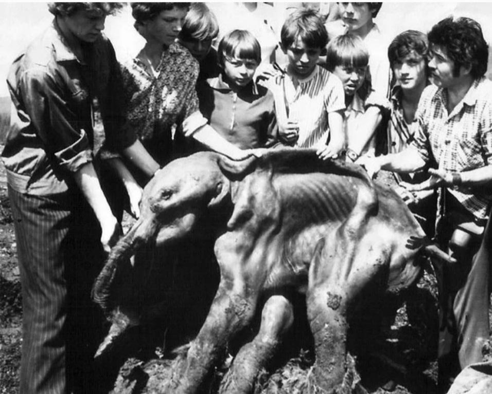 Ещё одно архивное фото с мамонтёнком.