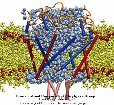MscL – механочувствительный канал высокой проводимости