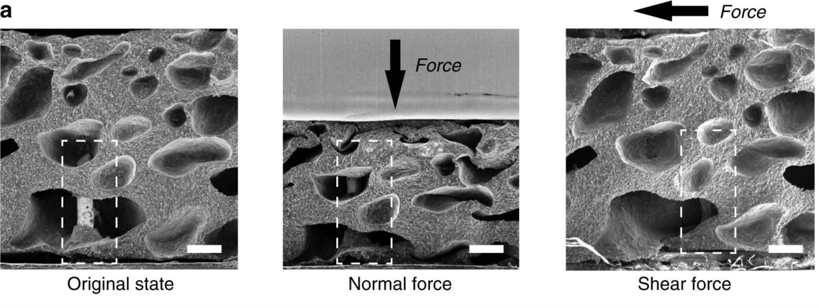 Изображение AiFoam, сделанное при помощи электронной микроскопии. Слева направо: материал в исходном состоянии, при нагрузке с нормальной силой, при боковой нагрузке. Пунктиром выделено положение трёхмерного электрода. Стрелки обозначают направление приложенной силы. Шкала 200 мкм.