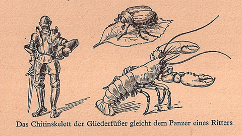 "Иллюстрация из  ""Du und das Leben"""