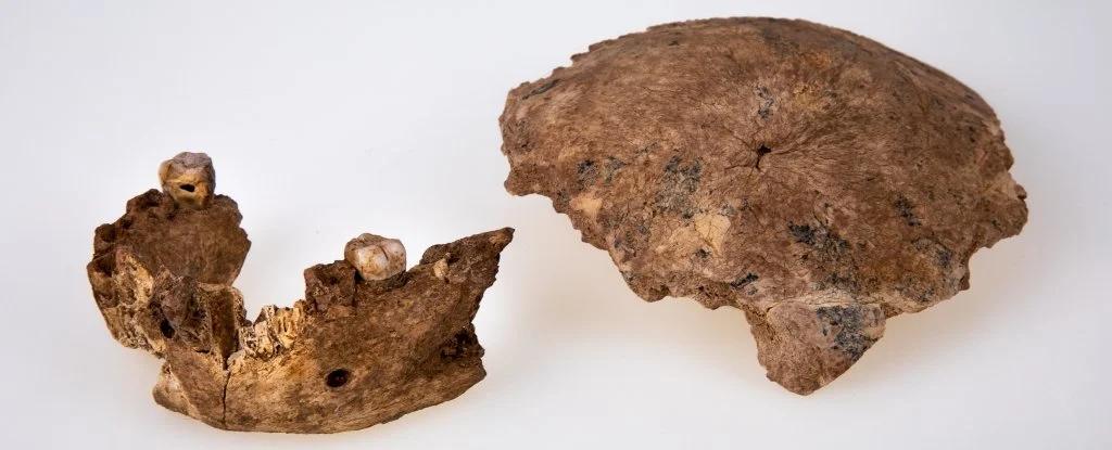 Кости из Нешер Рамла. Источник: sciencealert.com