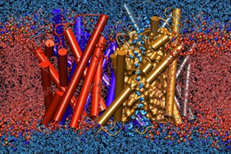 Аквапорин встроенный в мембрану прокачивает воду внутрь