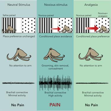 Схематичное изображение того как выглядит боль.
