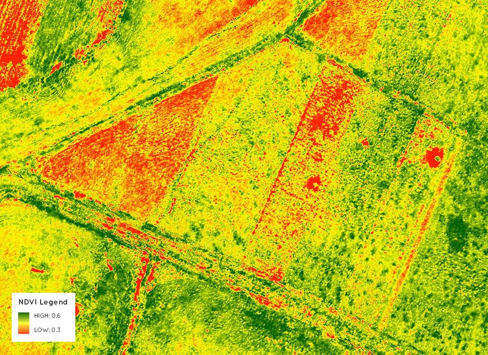 Изображение поля с подсчитанным ndvi