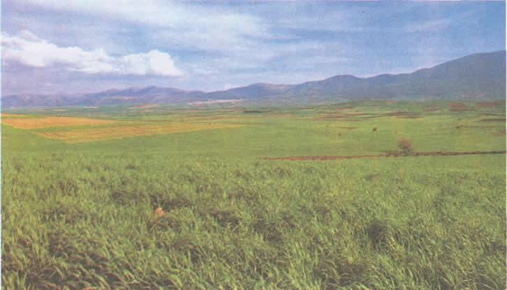 Современный вид Платейских полей