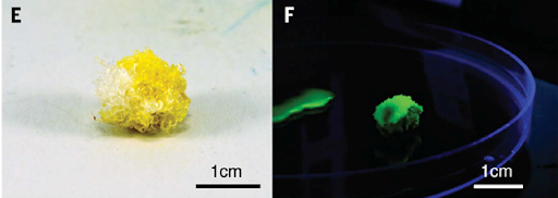 Хлопок с флуоресцентной модификацией приобрел желтый цвет, светится зеленым в ультрафиолете и, увы, уступает обычному волокну по прочности (хлопок с магнетизмом не уступает)