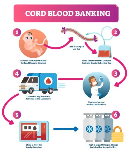 Рисунок 4. Процедура забора пуповинной крови и определения ее на хранение