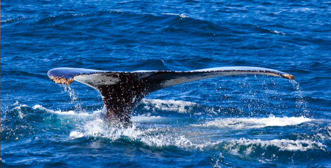 Group-IB обнаружила фишинг-киты, нацеленные на 260 брендов