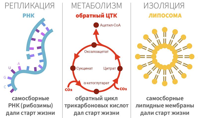 Рисунок 1. Три распространённых примера характерных функций жизни в теориях её происхождения.