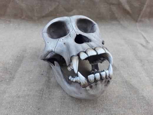 Реплика черепа шимпанзе. Источник: https://vk.com/nessiterabf