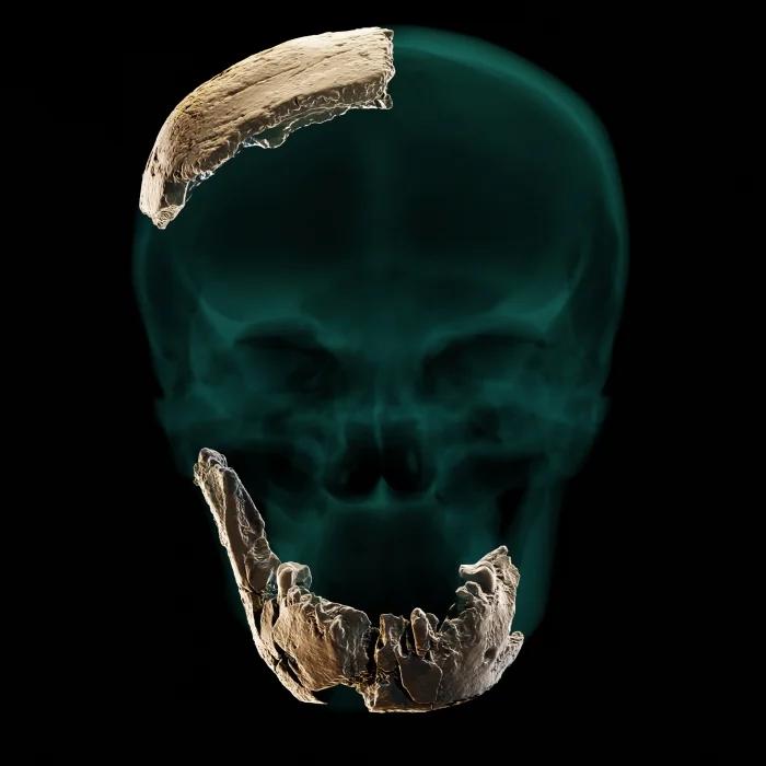 Сохранившиеся части черепа Homo Nesher Ramla. Источник: sciencealert.com