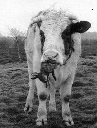 Корову занимающуюся каннибализмом  можно посмотреть здесь [https://www.youtube.com/watch?v=OtxmLV8fg98&feature=emb_logo]. Конь и овца [https://www.youtube.com/watch?v=SG2wkkJmFo0]