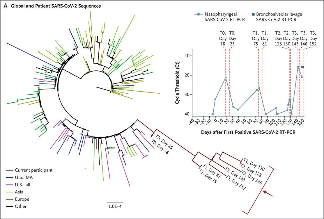 Красная ветвь — геномы SARS-CoV-2 пациента по дням; остальные ветви — типичные последовательности в штате, стране и мире