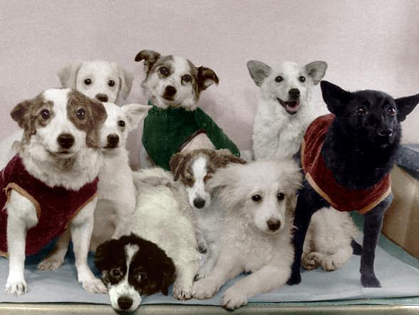 Собаки-космонавты со своим потомством