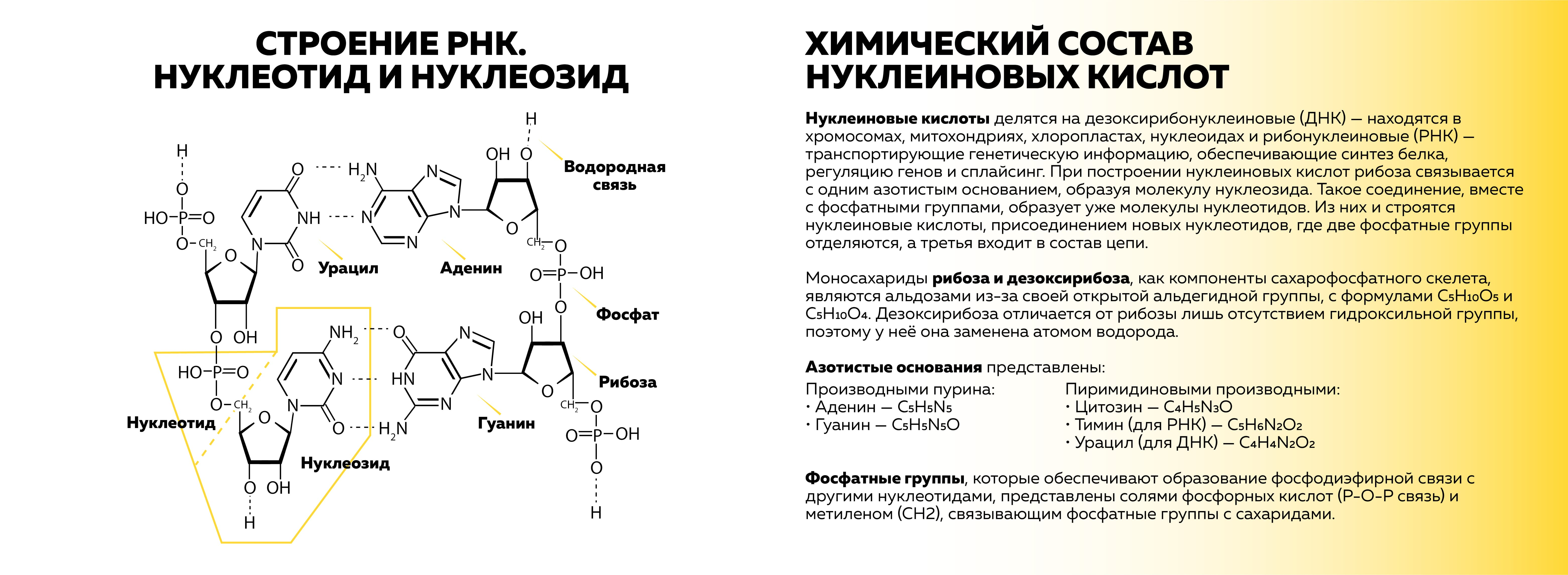 Рисунок 1. Источник: собственная иллюстрация на основе материала книги Михаила Никитина «От туманности до клетки»