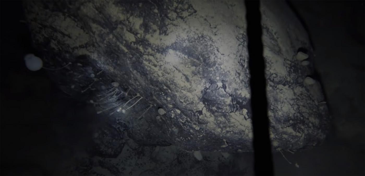 Перевод Ученые случайно обнаружили колонию странных существ подо льдом Антарктиды