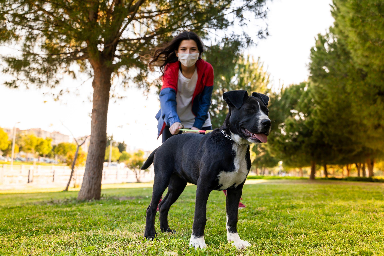 Кошек и собак нужно будет прививать собственной вакциной от коронавируса, чтобы победить пандемию, предполагают учёные