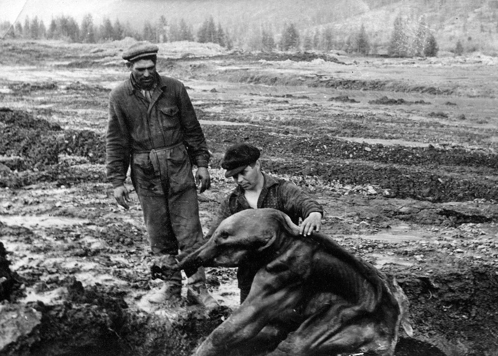 Бульдозерист Анатолий Владимирович изучает мамонтёнка Диму