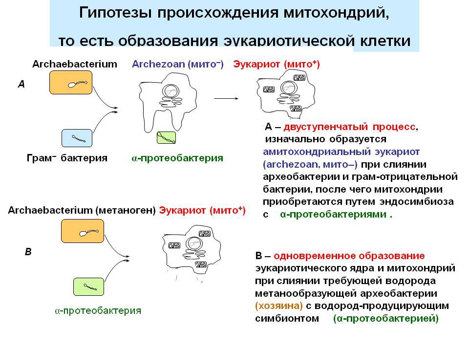 водородные гипотезы