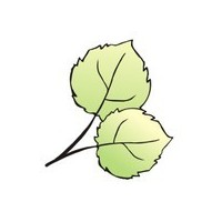 Логотип компании «Osinka»