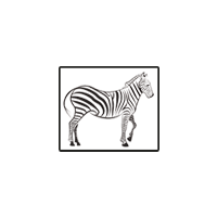 Логотип компании «Две зебры»