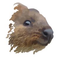 Логотип компании «Квокка»
