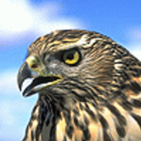 falcon4fun