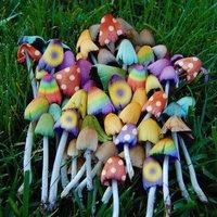 PsyShine Mushroom (psyshine-mushroom) – web-разработчик, SEO