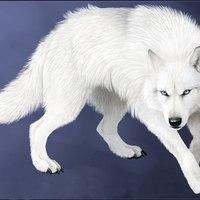 nightwolf007