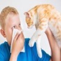 alergialechenie