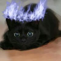blackjetcat