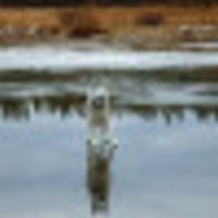 gleb-voronetskiy