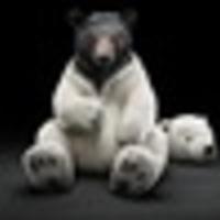 olympic-bear