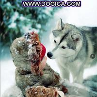wwwdogicacom