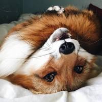 fox-varvara