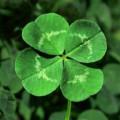 Fourfolium