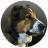 sitehound