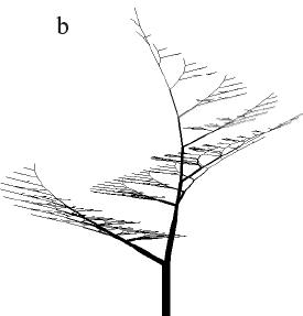 Рисунок 2.7b. Модели деревьев с симподиальным ветвлением Эоно и Кьюниай, полученные на L-systems.