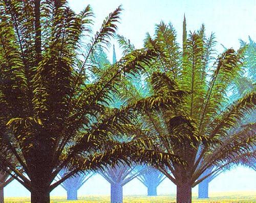 Рисунок 2.5. Навес из масличных пальм, CIRAD Modelisation Laboratory.