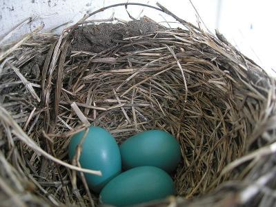 У вас есть 2 яйца