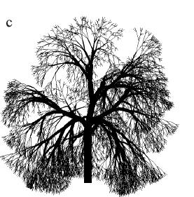 Рисунок 2.8c. Модели деревьев с тернарным ветвлением.